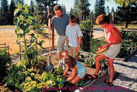 Stock Photo #5071: keywords -  cooperate cooperating cooperative cultivate family food garden gardener gardening grower grown harvest hobby home horz outdoor outdoors outside plant plants released residence residential share skill soil summer team together vegetable vegetables work