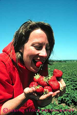 Stock Photo #5095: keywords -  berry cute eat eating female food fresh fruit funny grin harvest many pick produce red released smile strawberries strawberry unusual vert woman